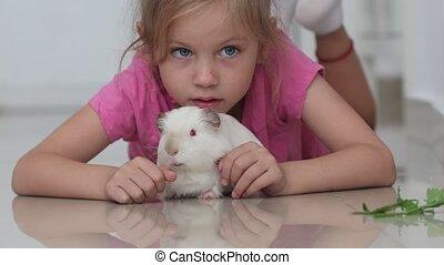 gwinea, leżący, dziewczyna, biały, świnia, podłoga, mały
