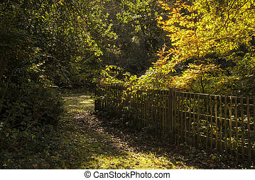 gyönyörű, élénk, arany-, ősz, bukás, erdő, táj