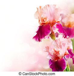 gyönyörű, írisz, virág, művészet, menstruáció, tervezés