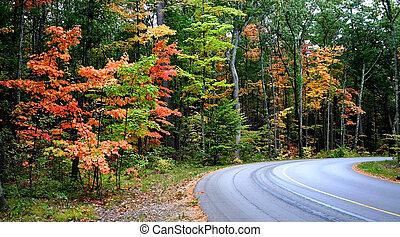 gyönyörű, ősz, autózás