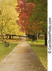 gyönyörű, ősz, bukás, erdő, színhely