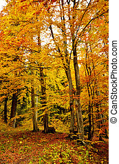 gyönyörű, ősz, bukás, erdő, színhely, noha, vibráló, befest