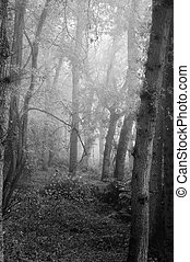 gyönyörű, ősz, bukás, természet, ködös, erdő, táj