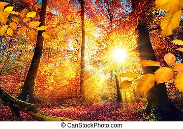 gyönyörű, ősz erdő, napvilág