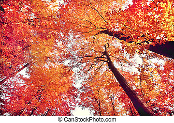 gyönyörű, ősz erdő
