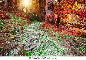 gyönyörű, ősz erdő, táj