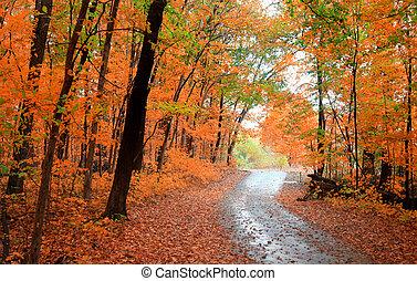 gyönyörű, ősz, fasor
