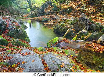 gyönyörű, ősz, folyó, erdő