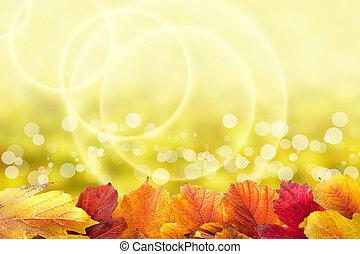 gyönyörű, ősz, háttér, noha, viburnum, zöld