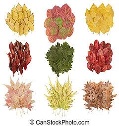 gyönyörű, ősz kilépő, állhatatos
