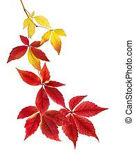gyönyörű, ősz kilépő, egyezség