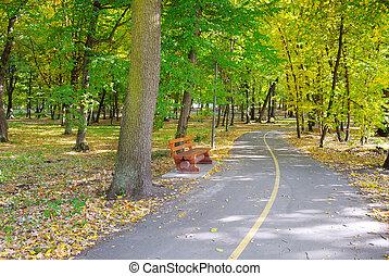gyönyörű, ősz, liget, táj