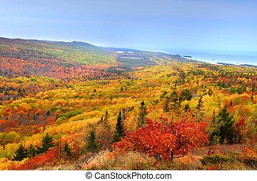 gyönyörű, ősz parkosít