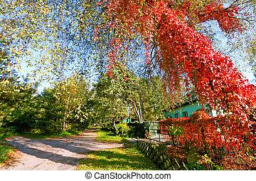 gyönyörű, ősz