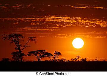 gyönyörű, afrika, napnyugta, szafari