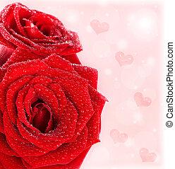 gyönyörű, agancsrózsák, határ, piros, piros