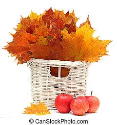 gyönyörű, alma, zöld, elszigetelt, ősz, piros