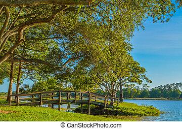 gyönyörű, bridzs, taylor, florida., sziget dísztér, jár, erdő, s., largo, jános, nap, kilátás