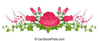 gyönyörű, csokor, agancsrózsák