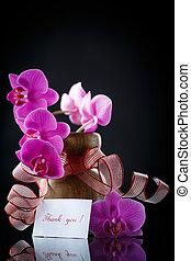 gyönyörű, elágazik, phalaenopsis, noha, hála
