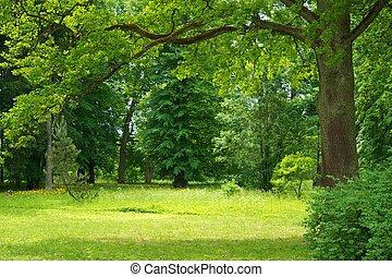 gyönyörű, erdő, táj