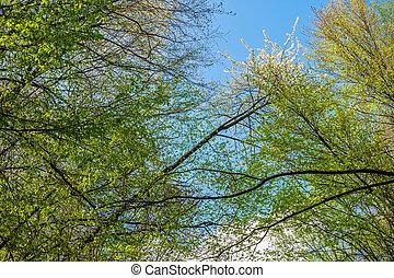 gyönyörű, eredet, bitófák, zöld erdő, táj