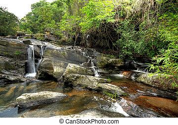 gyönyörű, eredet, erdő, vízesés