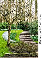 gyönyörű, eredet, kert