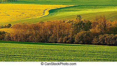 gyönyörű, eredet, táj, vidéki