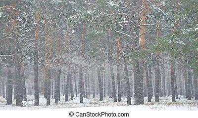 gyönyörű, este, tél, hóvihar, természet, fa, hóesés, késő,...