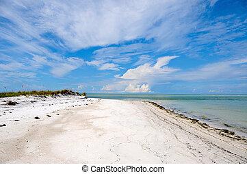gyönyörű, florida, partvonal