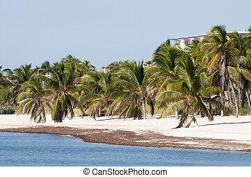 gyönyörű, florida, usa, nyugat, homok, kulcs, white tengerpart