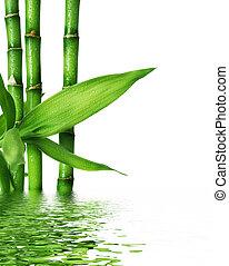 gyönyörű, friss, bambusz