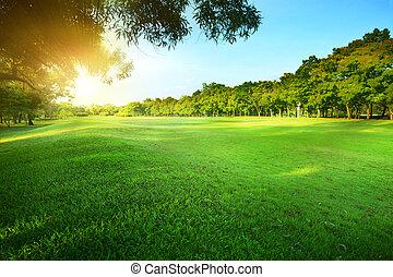 gyönyörű, gr, fény, liget, reggel, zöld, nap, közönség,...