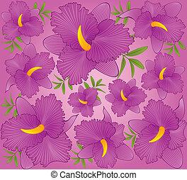 gyönyörű, háttér, orhidea