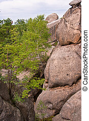 gyönyörű, hegy, bitófák, zöld, carpathians, táj
