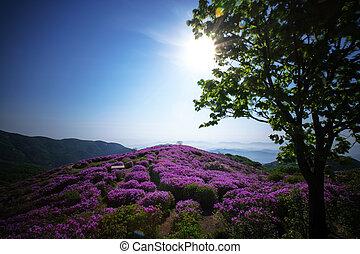 gyönyörű, hegyek, alatt, dél-korea