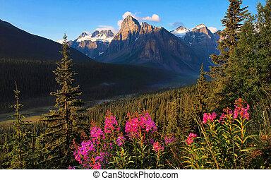 gyönyörű, hegyek, napnyugta, sziklás, táj