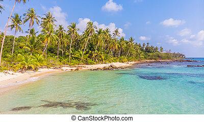 gyönyörű, kókuszdió, antenna, fa, pálma, tenger, tengerpart, kilátás