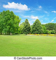 gyönyörű, kaszáló, a parkban
