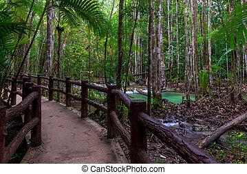 gyönyörű, kerítés, természetjárás nyom, krabi, thailand., súlyos, erdő