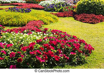 gyönyörű, kert, design.