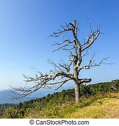 gyönyörű, kilátás, közül, a, népszerű, blue hegygerinc, hegy