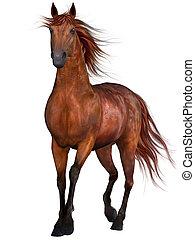 gyönyörű, ló