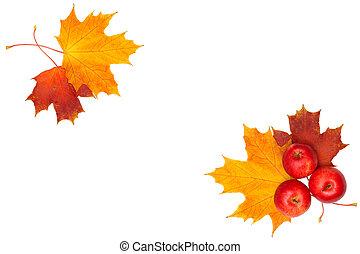 gyönyörű, levél növényen, alma, keret, -, elszigetelt, ősz, juharfa, háttér, white piros