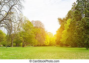 gyönyörű, liget, színhely, alatt, általános dísztér, noha, zöld fű, mező, zöld fa, berendezés, és, egy, részben felhős, kék ég