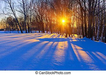 gyönyörű, napnyugta, alatt, egy, tél, erdő