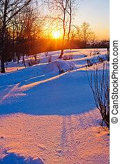 gyönyörű, napnyugta, erdő, tél