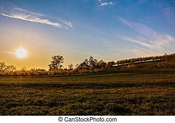 gyönyörű, napnyugta, felett, egy, mező, alatt, vidéki, ország, románia