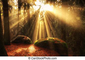 gyönyörű, napsugarak, erdő